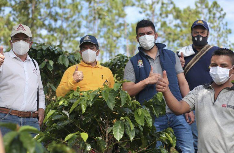 En el Cauca 19.000 familias avanzan en el fortalecimiento de la Caficultura