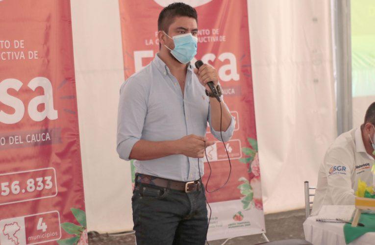 8.400 millones de pesos para  fortalecimiento de cadenas productivas de aguacate y fresa en el Cauca