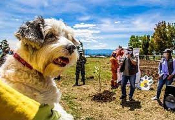El Refugio Animal para Popayán es una realidad